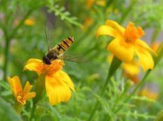 Afbeeldingsresultaat voor Open tuinendag tuinkriebels Groenlo
